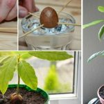 How To Grow Your Own Avocado Tree In Small Garden Pot